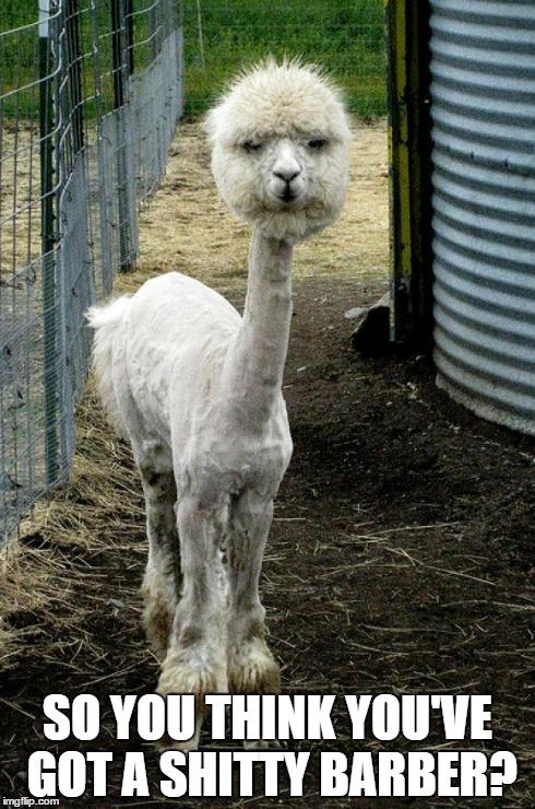 iru5d llama imgflip,Alpaca Meme Generator