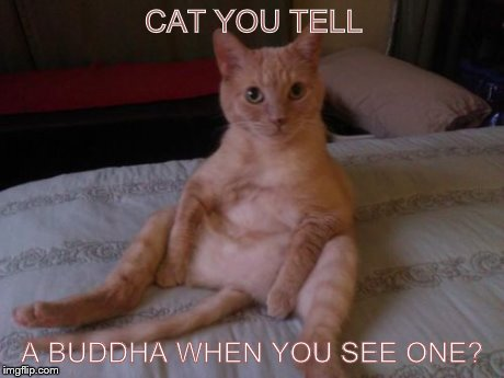 Chester The Cat | CAT YOU TELL A BUDDHA WHEN YOU SEE ONE? | image tagged in memes,chester the cat | made w/ Imgflip meme maker