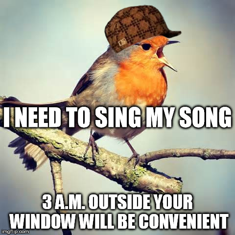 Trying to get a few hours of precious sleep. | 3 A.M. OUTSIDE YOUR WINDOW WILL BE CONVENIENT I NEED TO SING MY SONG | image tagged in scumbag,bird | made w/ Imgflip meme maker