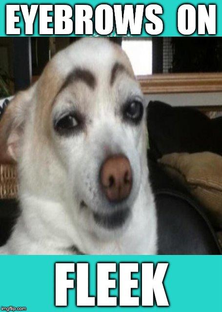 eyebrows on fleek   imgflip
