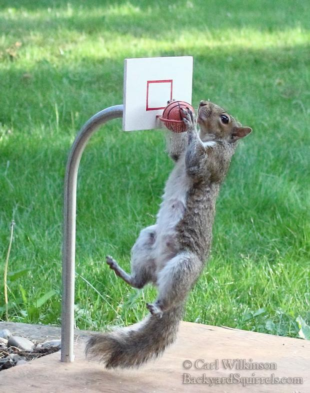 Funny Blank Meme Photos : Squirrel basketball blank template imgflip