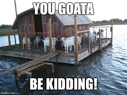 Float my goat | YOU GOATA BE KIDDING! | image tagged in goats,puns | made w/ Imgflip meme maker