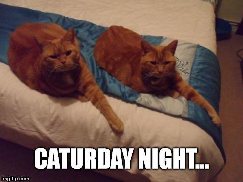Resultado de imagen de it is saturday night cat