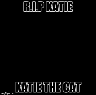 R.I.P | R.I.P KATIE KATIE THE CAT | image tagged in blank,rip,katie | made w/ Imgflip meme maker