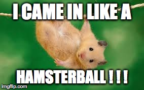 I CAME IN LIKE A HAMSTERBALL ! ! ! | image tagged in hamster,funny,funny memes,animals,funny animal,funny animals | made w/ Imgflip meme maker
