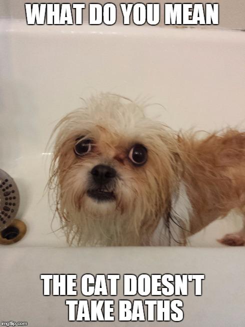 jbn5u dog not happy about bath time imgflip