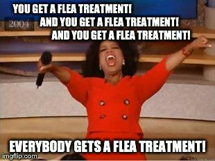 jbxg0 flea memes for days sandstone animal hospital
