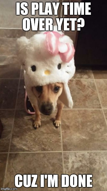 Hello kitty  | IS PLAY TIME OVER YET? CUZ I'M DONE | image tagged in dogs,cute,cosplay | made w/ Imgflip meme maker