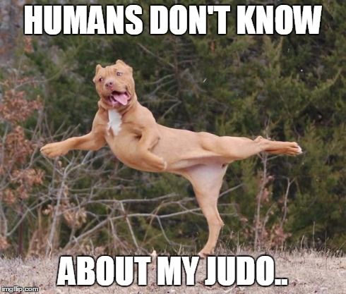 HUMANS DON'T KNOW ABOUT MY JUDO.. | image tagged in judo dog | made w/ Imgflip meme maker