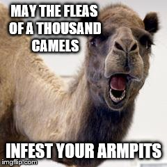 Camel | MAY THE FLEAS OF A THOUSAND CAMELS INFEST YOUR ARMPITS | image tagged in camel | made w/ Imgflip meme maker