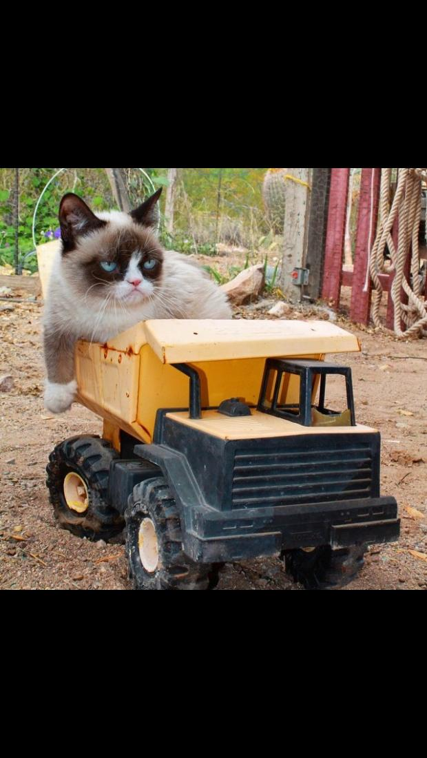 Grumpy Cat - Tractor Blank Template - Imgflip