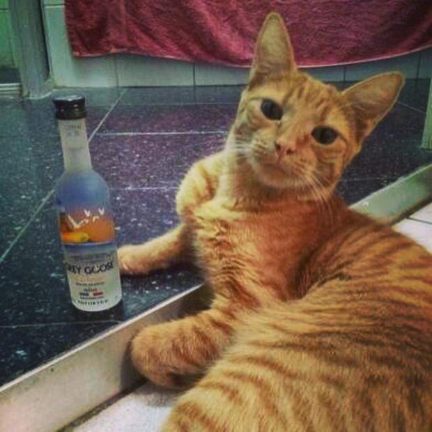 I don't always have vodka Memes - Imgflip