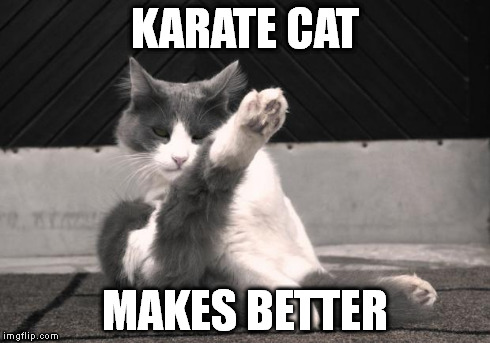 Karate Cat | KARATE CAT MAKES BETTER | image tagged in karate cat | made w/ Imgflip meme maker
