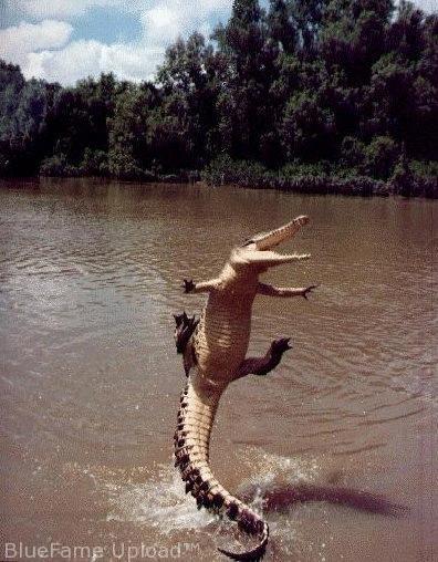 happy crocodile blank template imgflip