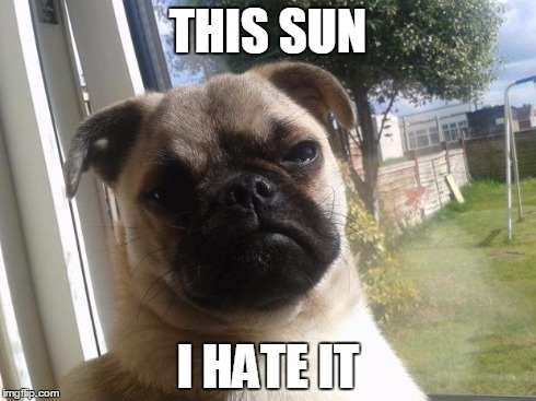 Grumpy Dog | THIS SUN I HATE IT | image tagged in grumpy dog | made w/ Imgflip meme maker