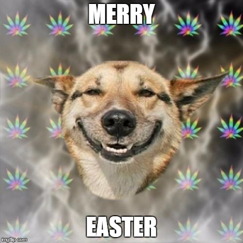 Stoner Dog | MERRY EASTER | image tagged in memes,stoner dog | made w/ Imgflip meme maker