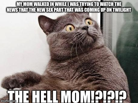 THE HELL cat | MY MOM WALKED IN WHILE I WAS TRYING TO WATCH THE NEWS THAT THE NEW SEX PART THAT WAS COMING UP ON TWILIGHT THE HELL MOM!?!?!? | image tagged in the hell cat | made w/ Imgflip meme maker