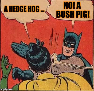 Batman Slapping Robin Meme | A HEDGE HOG ... NO! A BUSH PIG! | image tagged in memes,batman slapping robin | made w/ Imgflip meme maker