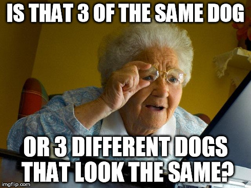 Grandma Finds The Internet Meme | IS THAT 3 OF THE SAME DOG OR 3 DIFFERENT DOGS THAT LOOK THE SAME? | image tagged in memes,grandma finds the internet | made w/ Imgflip meme maker