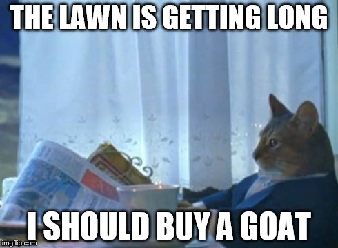 I Should Buy A Boat Cat Meme | THE LAWN IS GETTING LONG I SHOULD BUY A GOAT | image tagged in memes,i should buy a boat cat | made w/ Imgflip meme maker