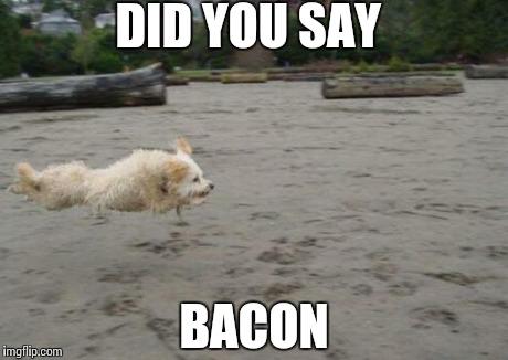 jvv0j running dog meme generator imgflip,Dog Running Meme