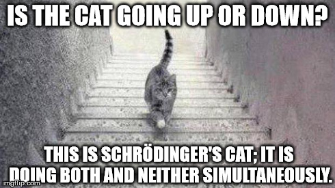 The Escher Cat Debate | IS THE CAT GOING UP OR DOWN? THIS IS SCHRÖDINGER'S CAT; IT IS DOING BOTH AND NEITHER SIMULTANEOUSLY. | image tagged in escher cat | made w/ Imgflip meme maker