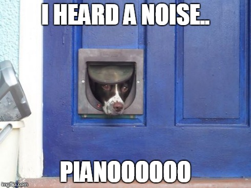 Dogflap | I HEARD A NOISE.. PIANOOOOOO | image tagged in dog,pet,springer | made w/ Imgflip meme maker
