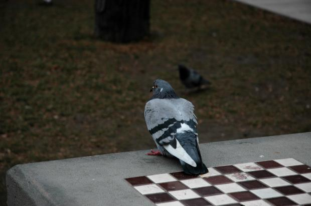 Pigeon Shitting on Chess Board Meme Template