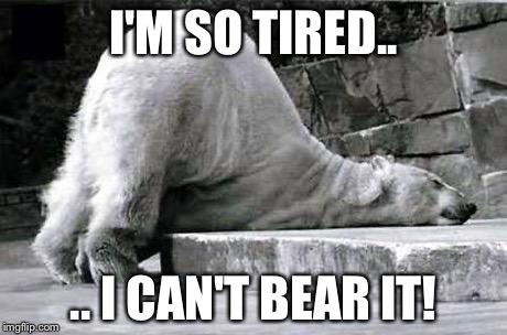 k71v0 tired polar bear memes imgflip