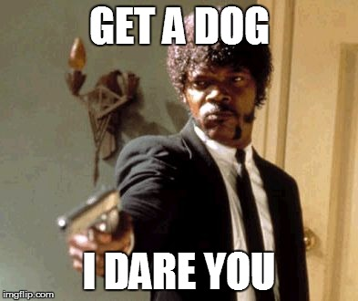 Say That Again I Dare You Meme | GET A DOG I DARE YOU | image tagged in memes,say that again i dare you | made w/ Imgflip meme maker