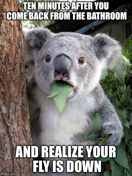 kd5dt surprised koala meme imgflip,Fly Down Meme