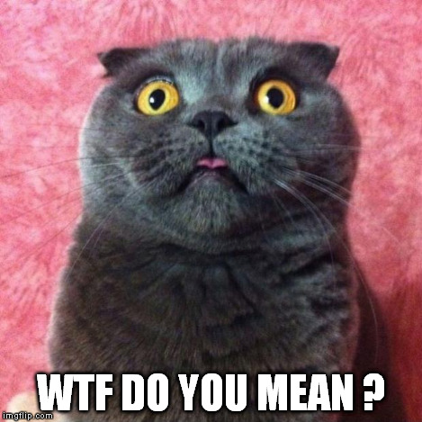 Astonished Cat | WTF DO YOU MEAN ? | image tagged in astonished cat | made w/ Imgflip meme maker
