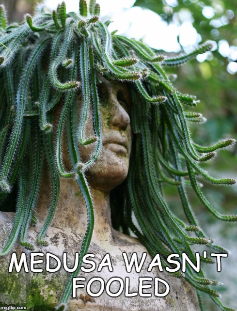 Medusa Wasn't Fooled | MEDUSA WASN'T FOOLED | image tagged in medusa,turned to stone,cactus,planters | made w/ Imgflip meme maker