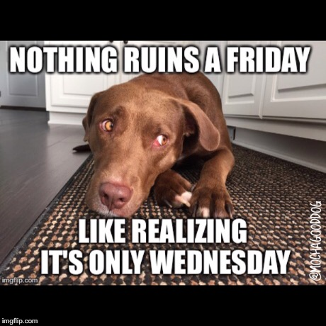 Wednesday Blues | image tagged in wednesday,sad dog,is it friday yet,hump day,friday | made w/ Imgflip meme maker