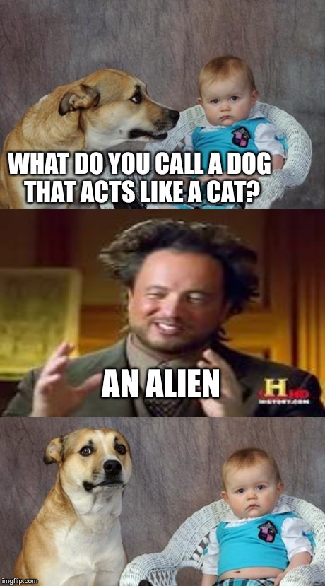 Dad Joke Dog Meme | WHAT DO YOU CALL A DOG THAT ACTS LIKE A CAT? AN ALIEN | image tagged in memes,dad joke dog,ancient aliens | made w/ Imgflip meme maker