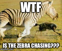 WTF IS THE ZEBRA CHASING??? | made w/ Imgflip meme maker