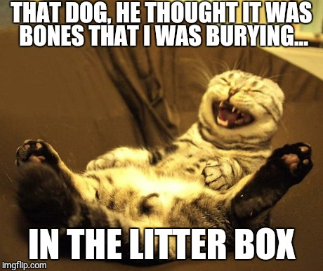 Bones, I tell ya | THAT DOG, HE THOUGHT IT WAS BONES THAT I WAS BURYING... IN THE LITTER BOX | image tagged in memes,funny memes,lolcat,funny cat,too funny | made w/ Imgflip meme maker
