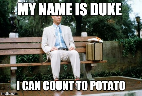 Forrest Gump | MY NAME IS DUKE I CAN COUNT TO POTATO | image tagged in forrest gump | made w/ Imgflip meme maker