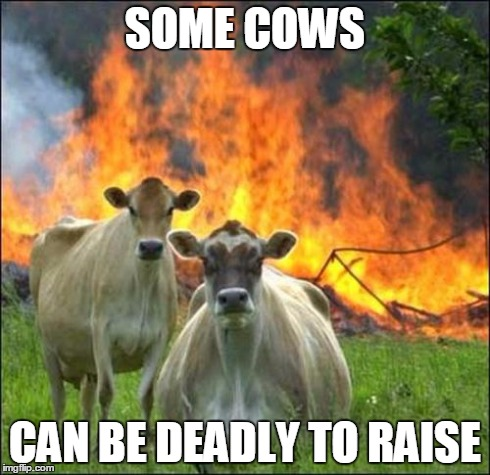 Evil Cows Meme | SOME COWS CAN BE DEADLY TO RAISE | image tagged in memes,evil cows | made w/ Imgflip meme maker