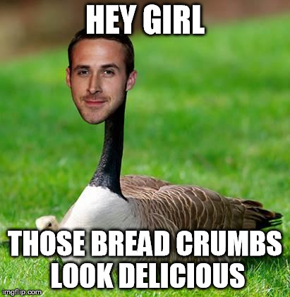 HEY GIRL THOSE BREAD CRUMBS LOOK DELICIOUS | image tagged in ryangosling | made w/ Imgflip meme maker