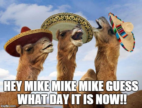 HEY MIKE MIKE MIKE GUESS WHAT DAY IT IS NOW!! | image tagged in wednesday,cinco,next,day,camel | made w/ Imgflip meme maker