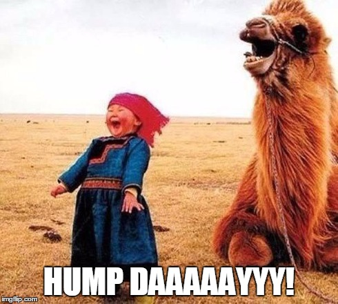 Hump day | HUMP DAAAAAYYY! | image tagged in hump day | made w/ Imgflip meme maker