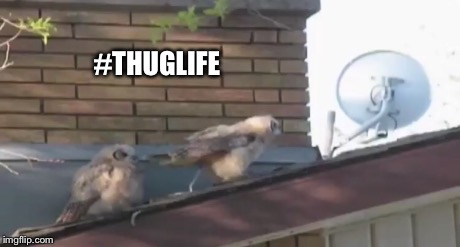 #THUGLIFE | image tagged in thug life,funny,funny memes | made w/ Imgflip meme maker