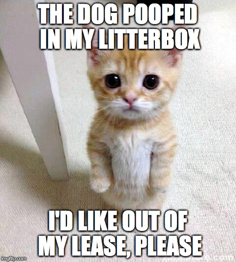 Cute Cat Meme | THE DOG POOPED IN MY LITTERBOX I'D LIKE OUT OF MY LEASE, PLEASE | image tagged in memes,cute cat | made w/ Imgflip meme maker