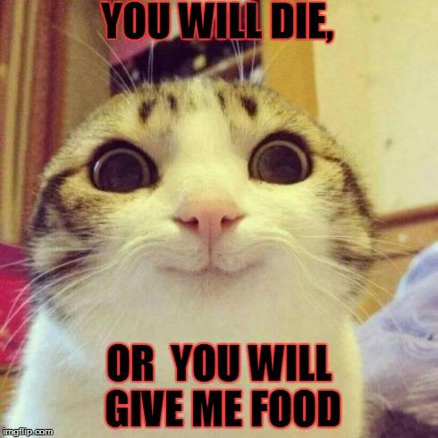 lb4c5 smiling cat meme imgflip,Food Cat Meme