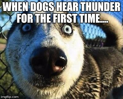 My dog.... | WHEN DOGS HEAR THUNDER FOR THE FIRST TIME.... | image tagged in scared dog,thunder,memes | made w/ Imgflip meme maker
