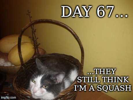 DAY 67... ...THEY STILL THINK I'M A SQUASH | image tagged in basket cat,funny,cats,funny | made w/ Imgflip meme maker