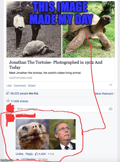 Was Scrolling Through My News Feed, And This Is What I See | THIS IMAGE MADE MY DAY | image tagged in mitch mcconnell,tortoise,facebook | made w/ Imgflip meme maker