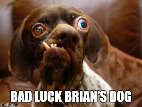 UGLY DOG | BAD LUCK BRIAN'S DOG | image tagged in ugly dog | made w/ Imgflip meme maker