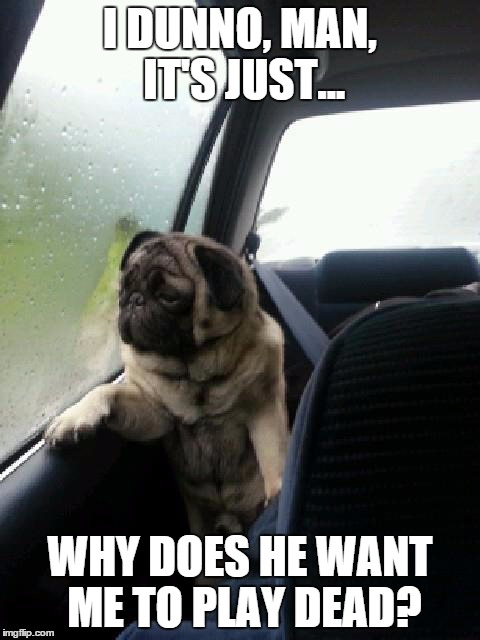 Introspective Pug | I DUNNO, MAN, IT'S JUST... WHY DOES HE WANT ME TO PLAY DEAD? | image tagged in introspective pug | made w/ Imgflip meme maker